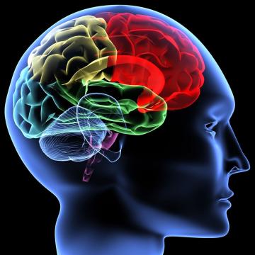 ความเครียด สมองและประสาท